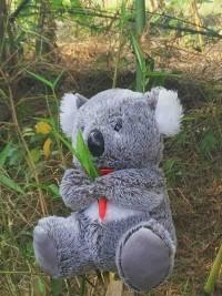 Jual Boneka Koala murahl