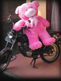 Jual Boneka Teddy Bear besar warna pink
