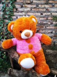 Jual Boneka Teddy Bear Jumbo Coklat Pink